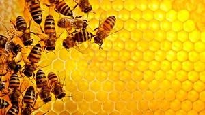 Мед пчелиный помогает от самых разных болезней.